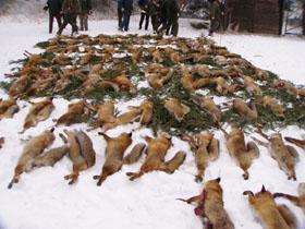 Ist der Landesjagdverband ein Tierschutzverein?