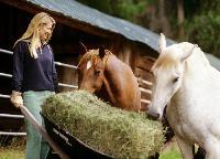 Atemwegsinfektionen beim Pferd