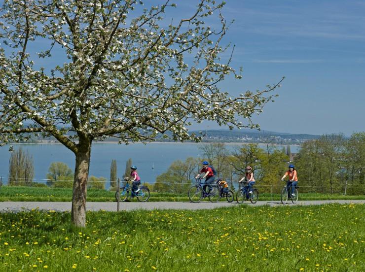 Apfelblüten-Hanami am Schweizer Bodensee