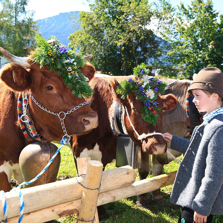 Viehscheid im Allgäu: Pfronten feiert den Ausklang des Alpsommers