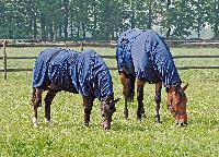 Sommerekzem bei Pferden