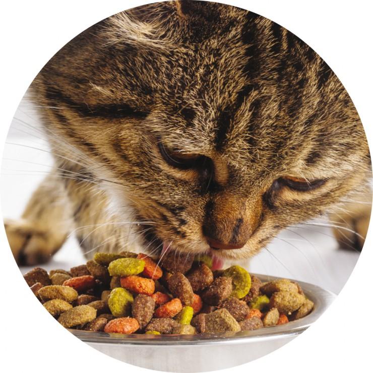 Erforschung der Geschmackssensorik bei Katzen - Strategische Partnerschaft zwischen BRAIN und DIANA Pet Food
