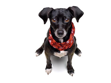 Doggy Loop, der Schlauchschal für Hunde