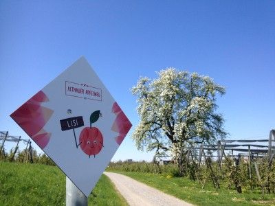 Neuer Apfelweg durchs Apfeldorf Altnau