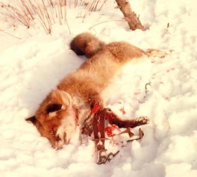 Jagdverordnung Hessen - Jäger glänzen durch Inkompetenz