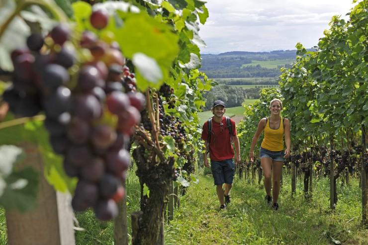 Neuer Weinweg in Weinfelden