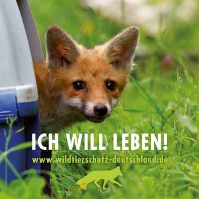 Online-Petition gegen Fuchsjagd im Landkreis Gießen