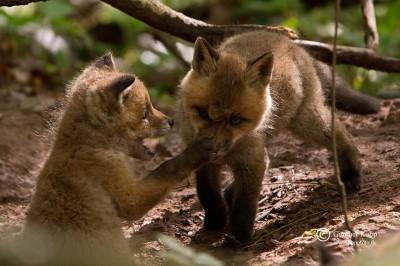Jagd: Tierquälerei, die von Backhaus (SPD, MV) bis Brunner (CSU, BY) und Schmidt (CSU, MdB) geduldet wird