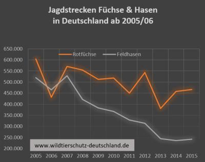 Trotz Totalabschuss von Füchsen und Rabenvögel keine Zunahme bei Hasen oder Fasanen