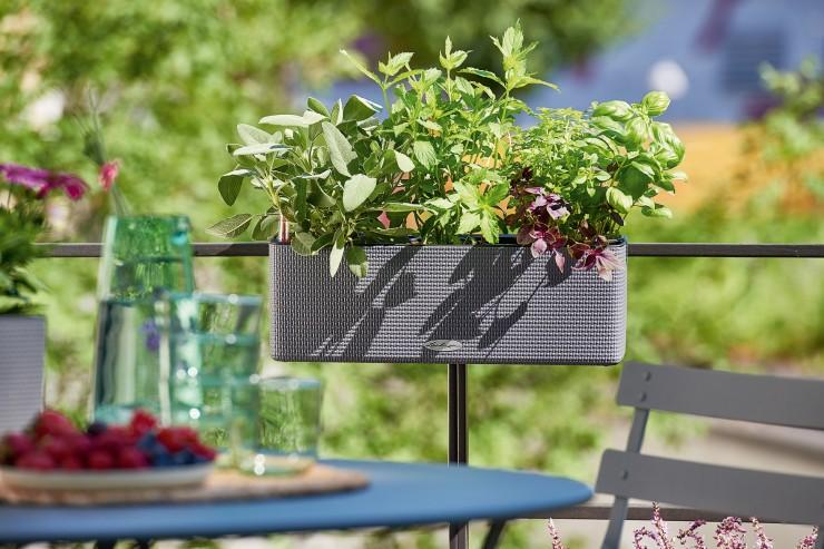 Bunter Stadtbalkon mit Kräutern und Blühpflanzen