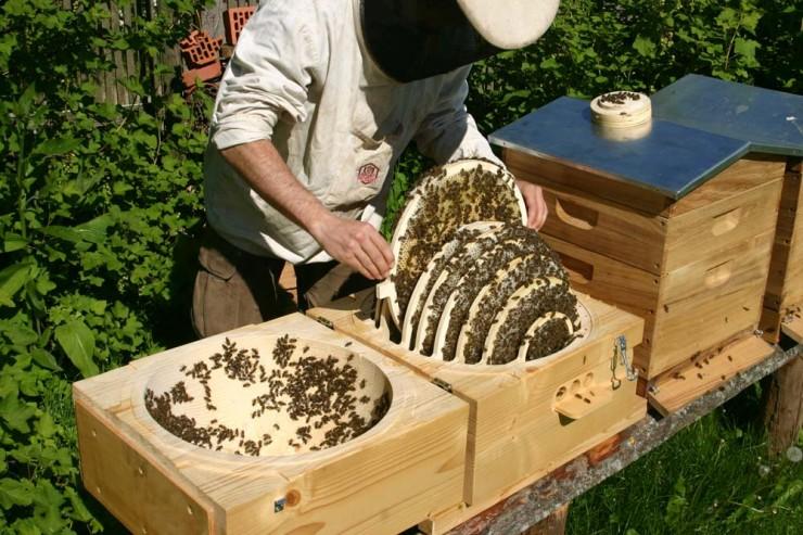 Planet Erde: Die Biene, das wichtigste Tier