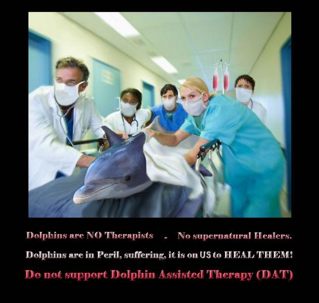 Tierschützer warnen vor Delfintherapie - Abzocke