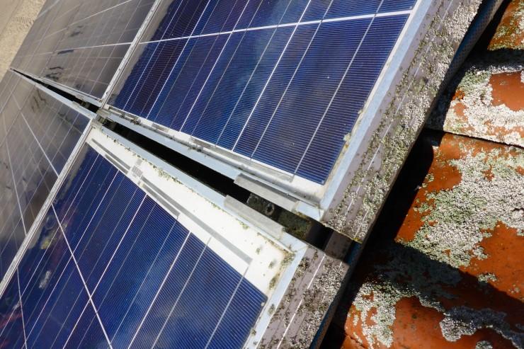 Flechten und Moos gefährden Photovoltaik Anlagen