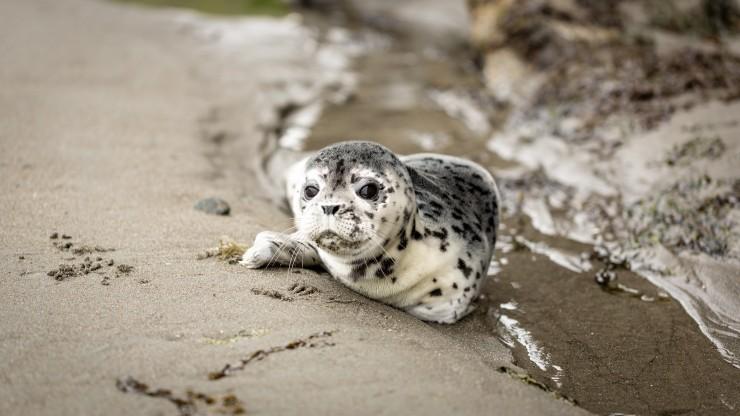 Startup Biomes unterstützt Rettung von Meeresbewohnern: Biotechnologie für gestrandete Robben