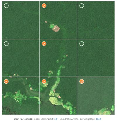 SAS und IIASA: Crowd-KI gegen die Abholzung der Wälder
