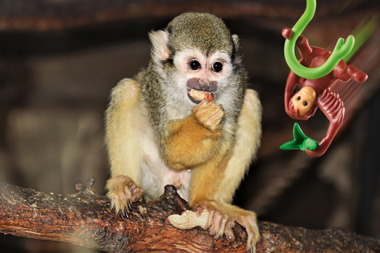 Tierischer Spaß im Sommer: PLAYMOBIL und der Tierpark Germendorf laden zum großen Zoo-Quiz ein