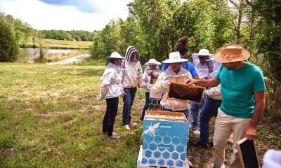 SAS schützt Bienen mit Advanced Analytics und Machine Learning vor dem Aussterben