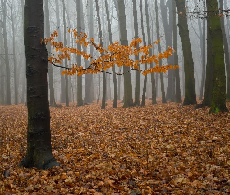 Die vermeintliche Energiewende bedroht den bundesdeutschen Wald