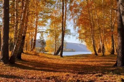 Mit Öko-Kraftwerken verschwindet der Wald