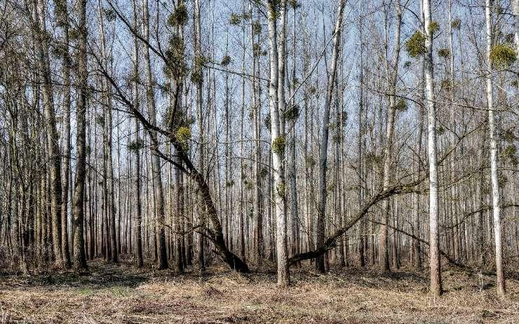 Die Energiewende bedroht den Wald der BRD