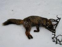 Der Jagd ein Gesicht geben - die Natur kommt ohne Fallen aus