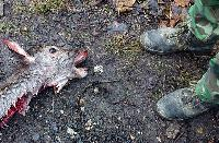 40 Tote durch Jagdwaffen: Jäger, Nachbar, Ehefrau