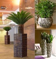 Hydropflanzen schaffen eine angenehme und gesunde Atmosphäre.