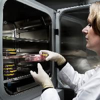 Technologischer Durchbruch bei BRAIN: neue Erkenntnisse zum Verständnis menschlicher Geschmackszellen und der Geschmacksmodulation