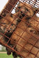 Deutscher Jagdschutzverband bekräftigt seine Einstellung zur Fallenjagd