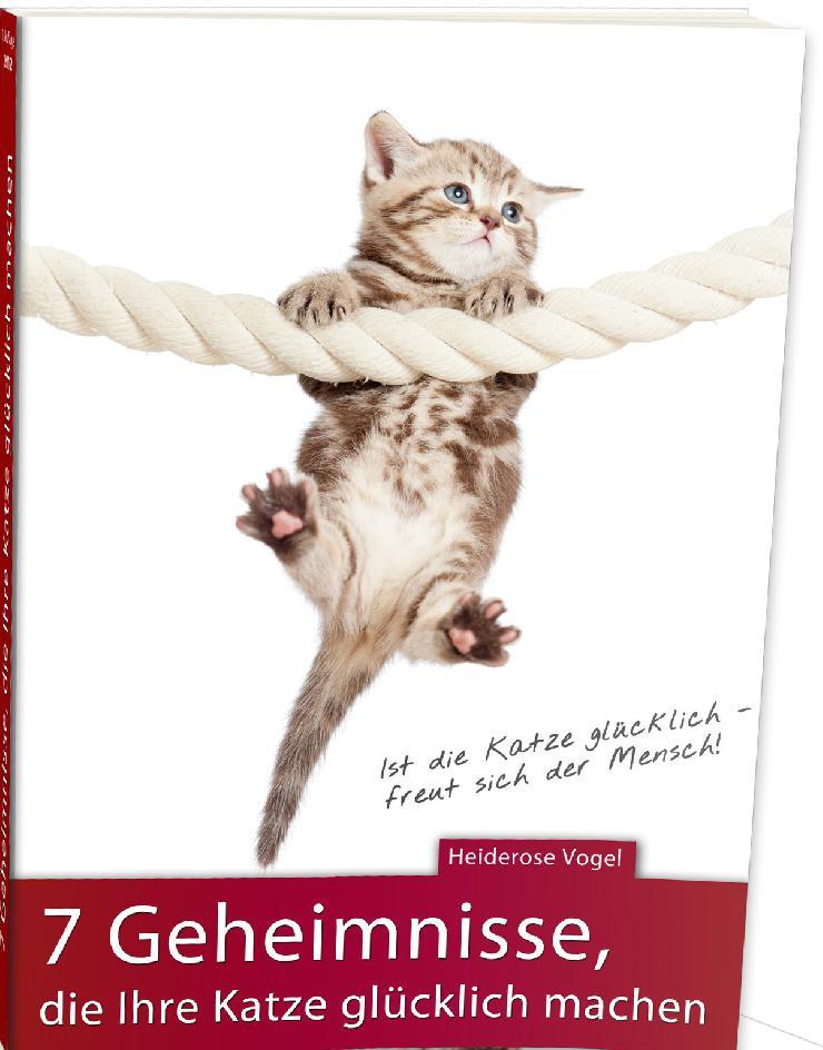Kostenloser Exklusiv-Report für alle Katzenliebhaber