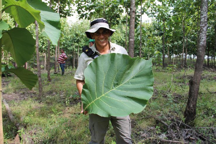 Teakbaum plantage  Pressenachricht: Life Forestry: Teakbäume pflanzen - Zu Besuch in ...