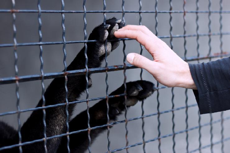 Tiervermittlungsportal aller deutschen Tierheime online