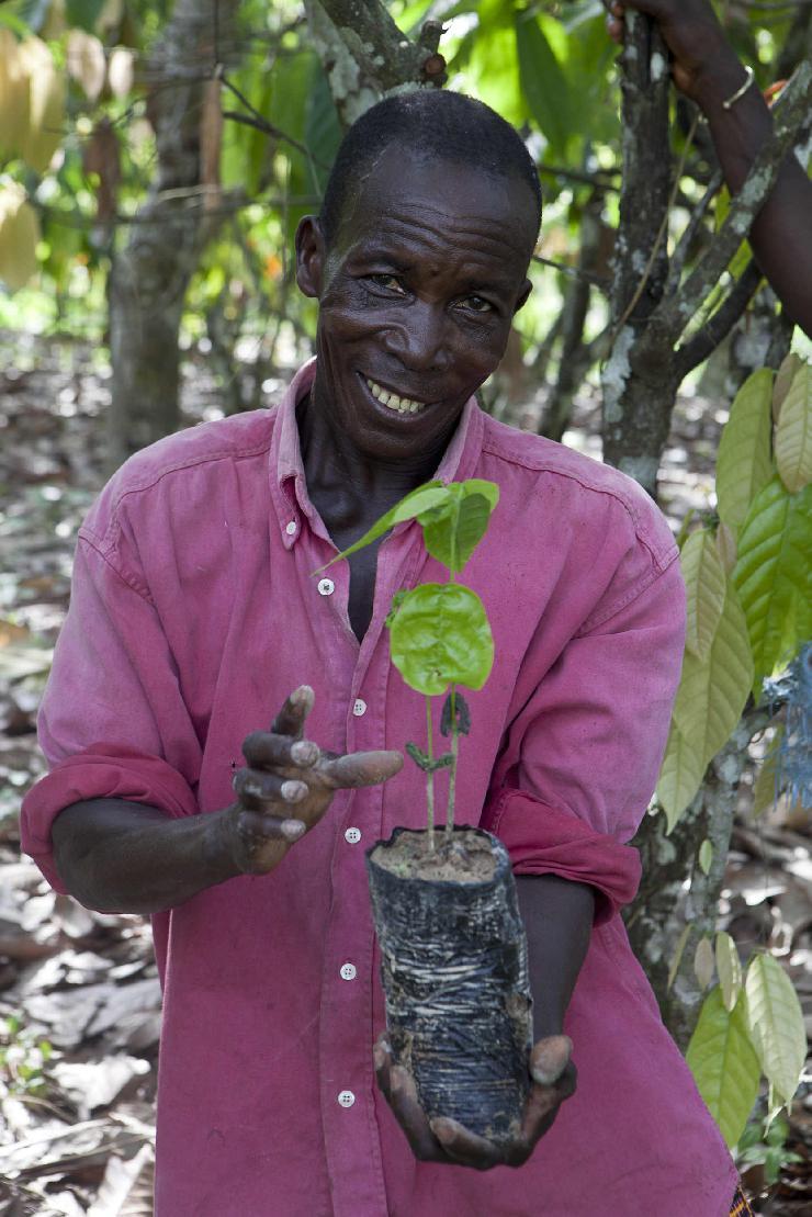 Die Arbeit der Rainforest Alliance in Afrika trägt Früchte  trotz Rückschläge