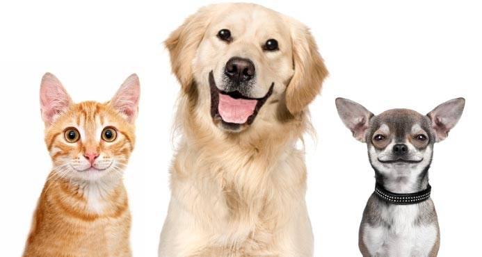 Tiergesundheit im Zentrum des Bemühens