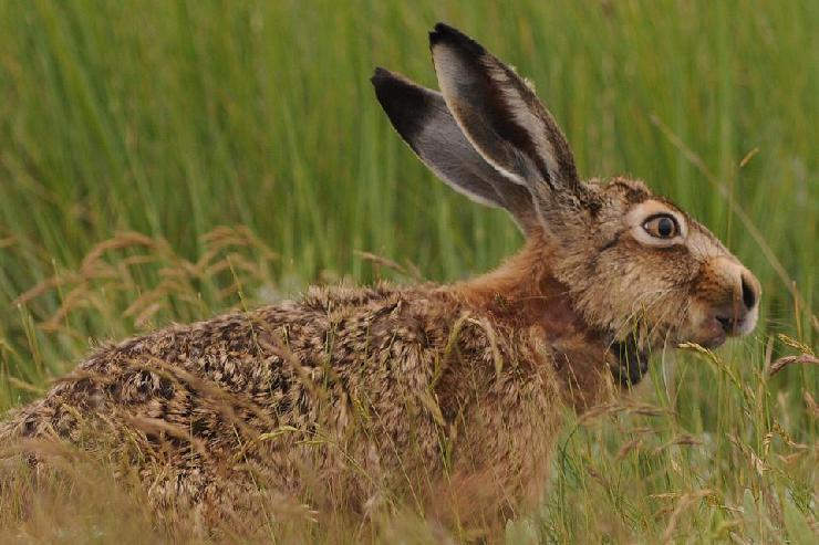 Ziel verfehlt: Die Jagd verfehlt den gesetzlichen Auftrag zur Hege