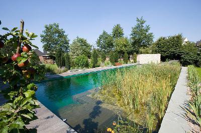 Schwimmteichbau: Planung und Umsetzung von Schwimmteichen