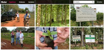 Umfassende Fotosammlung von Life Forestry veröffentlicht