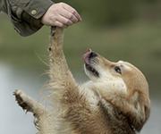 Dogdancing: Gymnastik für den Hund