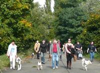 Hundespaziergang entlang am Main am 3. Oktober 2013