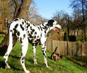 Spaziergang mit Hund im Wald entspannt angehen