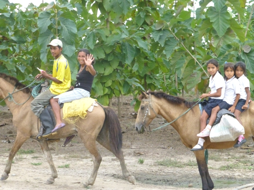 Forstwirtschaft auf dem Pferderücken