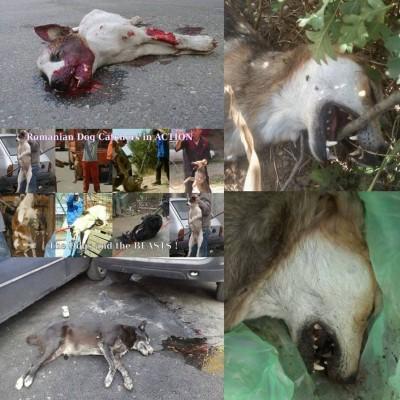 Hundemassaker in Rumänien