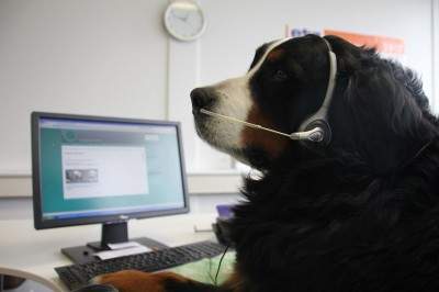 Robin Hood Tierheimservice deutschlandweiter Unterstützer für Tierheime und Tierschutzvereine