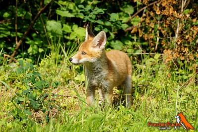 Jagdrecht - Wogegen protestieren Kleintierjäger im Saarland eigentlich?