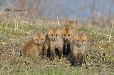 Saarland: Die Jagd sind wir