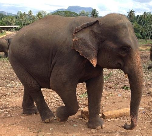 Elefanten-Coaching: Mit sanften Riesen gegen Stress