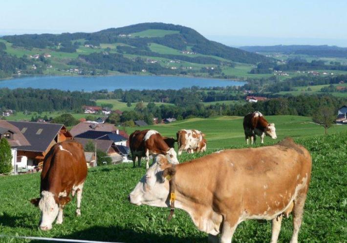 Österreich kennenlernen