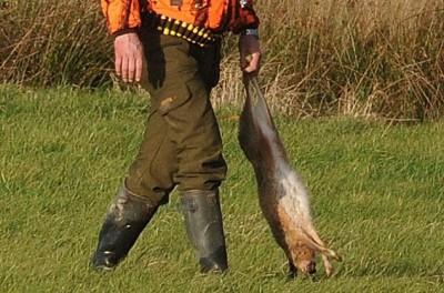 Grundstückseigentümerin muss Jagd nicht länger dulden